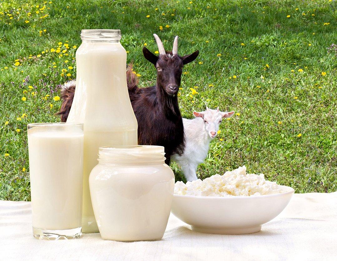 Selain Susu Sapi, Ini Ragam Susu dan Nutrisinya