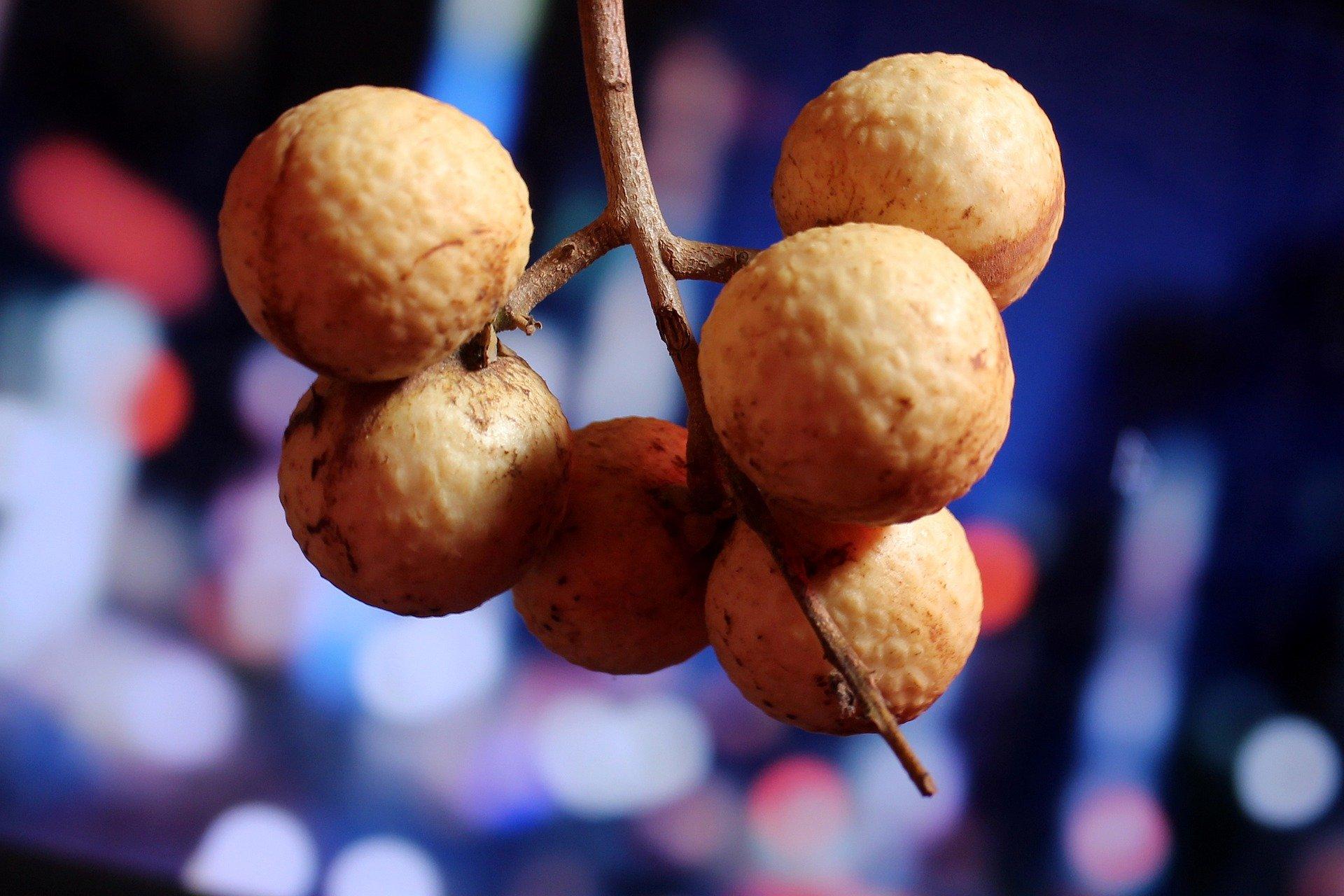 Longan, Buah Lengkeng Asal Tiongkok Untuk Antioksidan